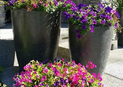 Beautiful Flowers in Cement Planters