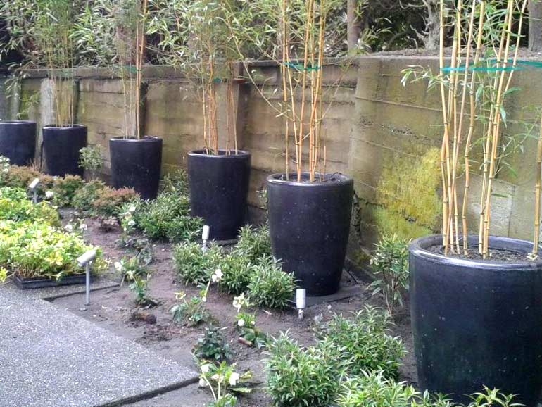 Tall large concrete stone cement pots for trees.
